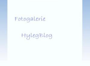 fotogal