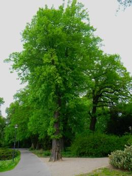 Lindengarten Wismar