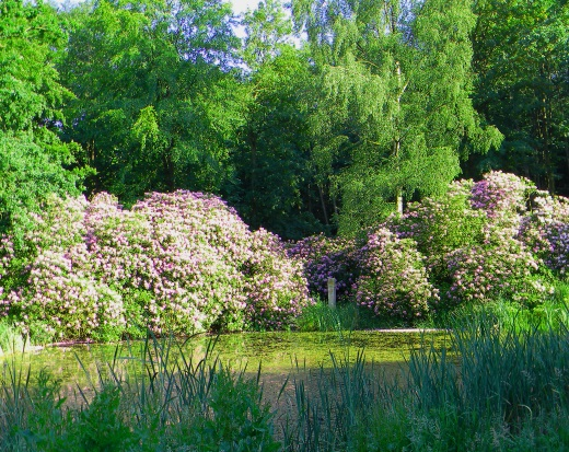 Schloss Wiligrad Teich